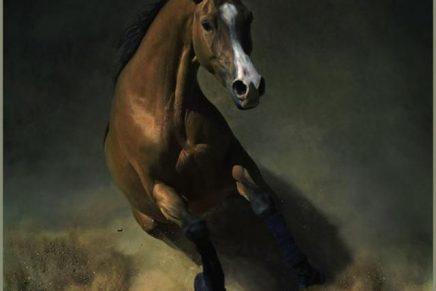 O cavalo no fundo do poço
