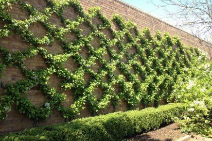 Como plantas trepadeiras