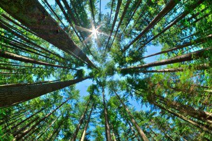 Como árvore plantada junto do ribeiro