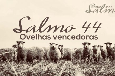 Ovelhas Vencedoras