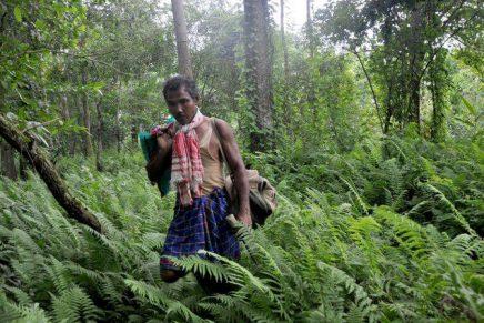 Jadav Payeng: um agente de transformação da natureza